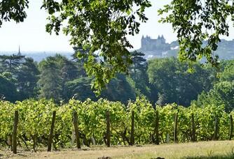 Langlois-Château - Les vignes