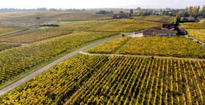 Clos Haut-Peyraguey - Le vignoble vu du ciel