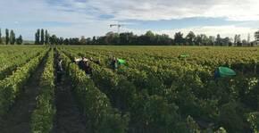 Château La Croix Meunier - Le vignoble pendant les vendanges
