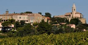Maison Brotte - Les vignes