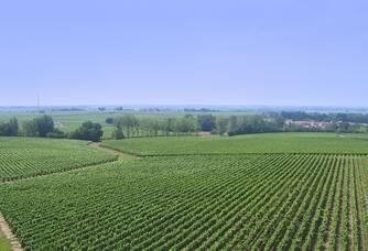 Château du Cléray - Le vignoble vu du ciel
