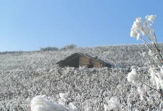 Domaine Baillais - Le vignoble en hiver