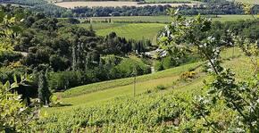 La Coume-Lumet(Languedoc) : Visite & Dégustation Vin