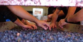 Domaine La Bouysse(Languedoc) : Visite & Dégustation Vin