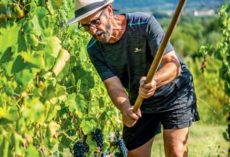 André dans les vignes