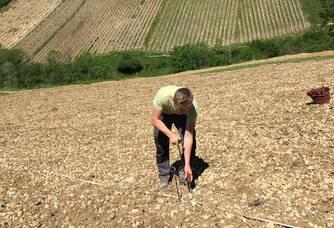 Plantation des Pinot noir