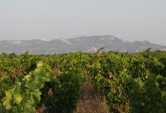 Les dentelles de Montmirail depuis les vignes