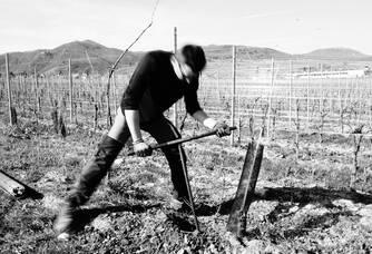 En Alsace on ne fore pas pour trouver du pétrole ... mais pour planter l'or blanc