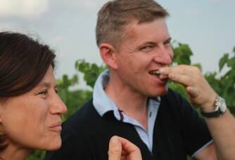 Pause raisin dans les vignes du Domaine de Bellevue