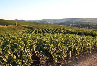 Vue sur les vignes de Damery