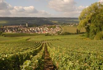 Vue sur le vignoble et le village de Damery
