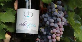 Château Boisset - Famille Nadal(Languedoc) : Visite & Dégustation Vin