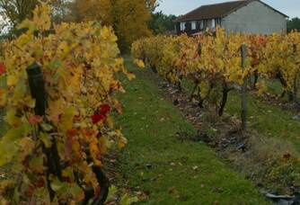 Les vignes du Château Laurou