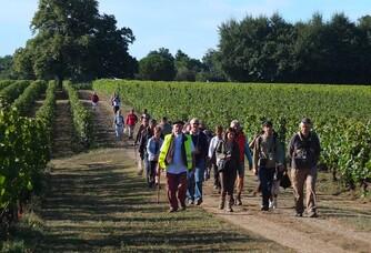 Balade dans les vignes au Château de Bois-Brinçon