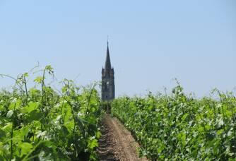 Vue du clocher entre les vignes du Château Rouget
