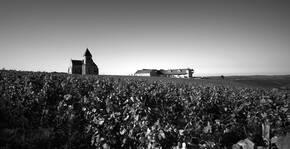 Vue du vignoble en noir et blanc du Domaine Brocard