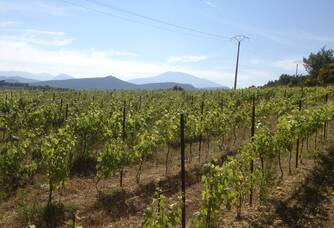 Le vignoble du Domaine de Crémone