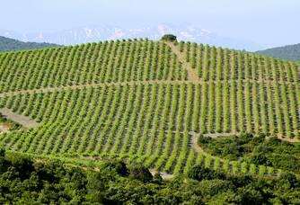 Superbe vue du vignoble du Domaine Lerys