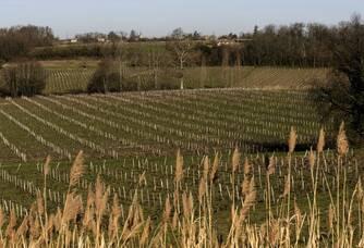 Le vignoble du Château Roc de Boissac