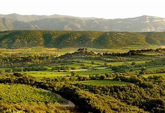 Vue du vignoble du Mas de Daumas Gassac