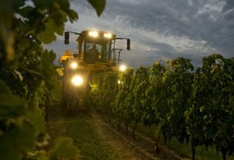 Le temps des vendanges aux Vignobles Ducourt