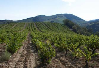 Au bout du vignoble de Mas Cristine c'est l'appellation Collioure !